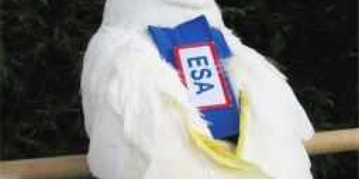 Do You Need An ESA Letter To Keep A Bird?