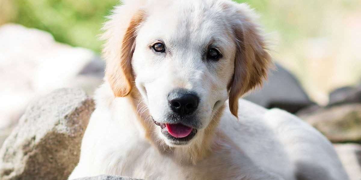 Are There Any Restrictions To Dog Breeds For Housing?
