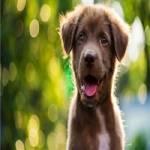 ESA Letter Dog Profile Picture