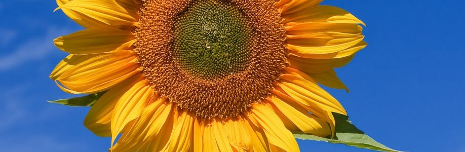 lottielottie82 Cover Image