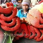 beli buah merah Profile Picture