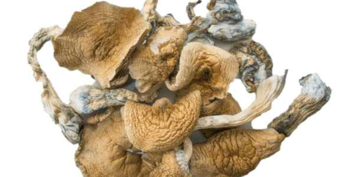 Benefits of golden teacher mushrooms, 5 reasons why you must include this